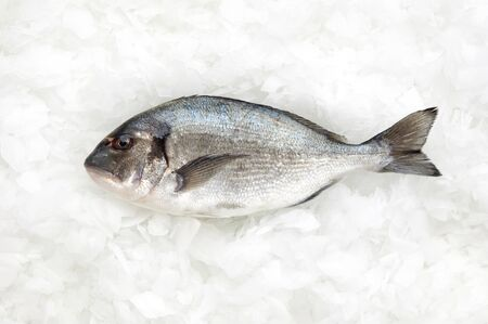 sparus: one fish called sparus aurata(gilt head bream) or dorade on ice Stock Photo