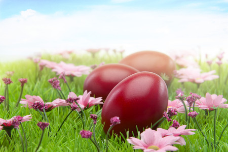 cristian: shiny red easter eggs on grass full of purple spring flowers Stock Photo
