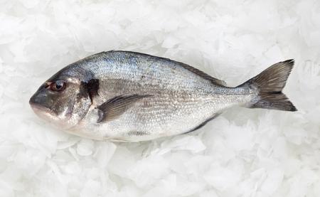 Frischer Dorado Fisch auf Eis, Luftaufnahme Standard-Bild - 69985844
