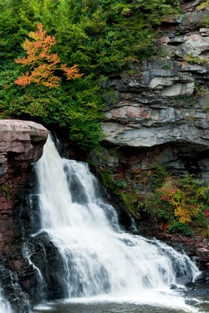 blackwater: The far side of Blackwater Falls with a single tree starting to change colors.