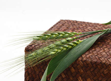 three green wheat branches from organic farming on top of a basket and with a white background (triticum)