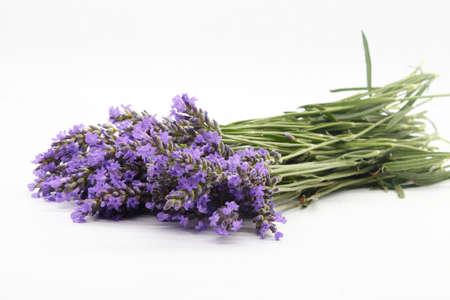 Lavender twig, alhucema, splashing or singular isolated and on white background (lavantula)