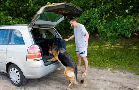 Dog getting into a car with her owner nearby Stock Photo