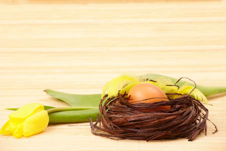 Two eggs in the nest with yellow feathers and tulip flower photo