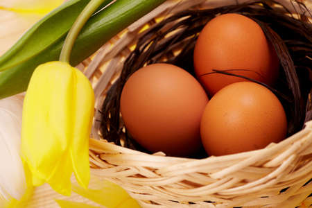 Three eggs in the nest with yellow feathers and tulip flower photo