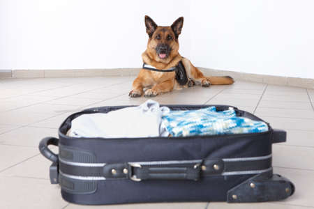 sniffer: Airport canine. Dogs like that sniffs out drugs or bomb in a luggage.
