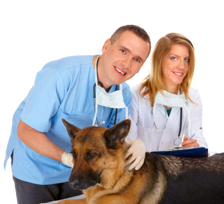 Vet and assistant examining dog, isolated on white Stock Photo - 8887395