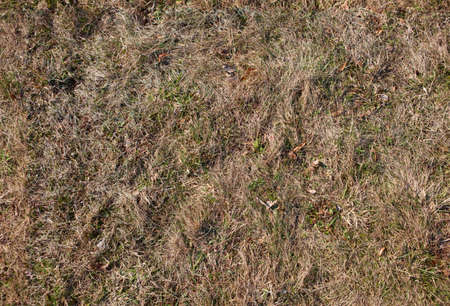 Seamless detailed texture of old half dry grass, high resolution colour, horizontal image. Stock Photo