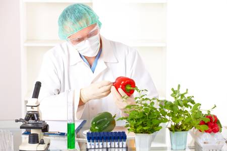 recombinant dna: Researcher holding up a GMO vegetable. Genetically modified organism or GEO here transgenic plant is an plant whose genetic material has been altered using genetic engineering techniques known as recombinant DNA technology.
