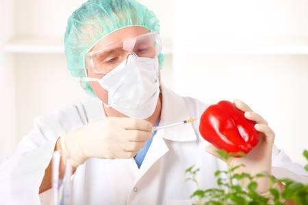 recombinant: Ricercatore alzando una verdura OGM. Geneticamente modificato organismo o GEO qui piante transgeniche sono una pianta cui materiale genetico � stato modificato utilizzando tecniche di ingegneria genetica conosciute come tecnologia del DNA ricombinante.  Archivio Fotografico