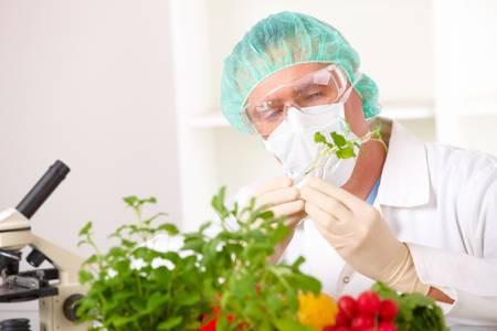 examenes de laboratorio: Investigador de la celebraci�n de un vegetal de OMG. Gen�ticamente manipuladas o GEO aqu� planta transg�nica es una planta cuyo material gen�tico ha sido modificado mediante t�cnicas de ingenier�a gen�tica conocidas como tecnolog�a de ADN recombinante.  Foto de archivo