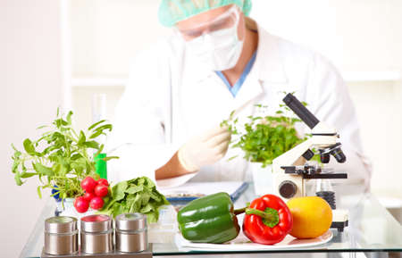 transgenic: Researcher with GMO plants. Genetically modified organism or GEO here transgenic plant is an plant whose genetic material has been altered using genetic engineering techniques known as recombinant DNA technology. Focus is on plants. Stock Photo