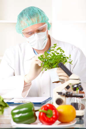 genetically modified: Ricercatore alzando una verdura OGM. Geneticamente modificato organismo o GEO qui piante transgeniche sono una pianta cui materiale genetico � stato modificato utilizzando tecniche di ingegneria genetica conosciute come tecnologia del DNA ricombinante.  Archivio Fotografico
