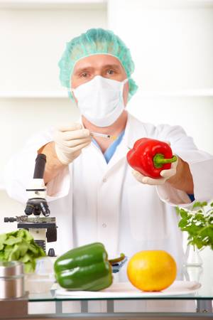 transgenic: Researcher holding up a GMO vegetable. Genetically modified organism or GEO here transgenic plant is an plant whose genetic material has been altered using genetic engineering techniques known as recombinant DNA technology.