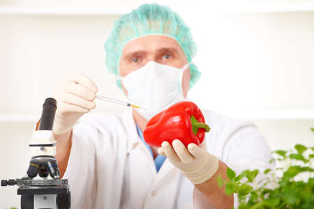 Researcher holding up a GMO vegetable. Genetically modified organism or GEO here transgenic plant is an plant whose genetic material has been altered using genetic engineering techniques known as recombinant DNA technology.  photo