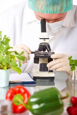 examenes de laboratorio: Investigador sosteniendo un vegetal de OMG. Manipuladas gen�ticamente o GEO aqu� planta transg�nica es una planta cuyo material gen�tico ha sido modificado mediante t�cnicas de ingenier�a gen�tica conocidas como tecnolog�a de ADN recombinante.