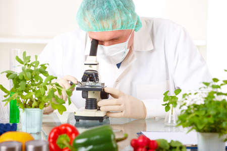 Researcher with microscope with a GMO vegetables. Genetically modified organism or GEO here transgenic plant is an plant whose genetic material has been altered using genetic engineering techniques known as recombinant DNA technology.  Stock Photo