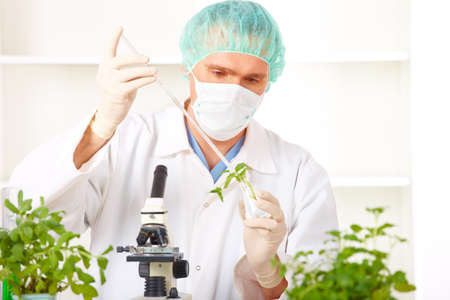transgenic: Researcher holding up a GMO plant. Genetically modified organism or GEO here transgenic plant is an plant whose genetic material has been altered using genetic engineering techniques known as recombinant DNA technology.  Stock Photo
