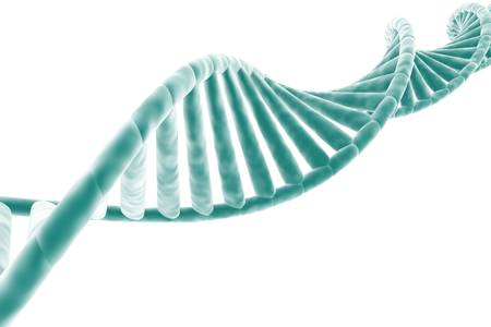dna strand: DNA strand isolated on white background Stock Photo