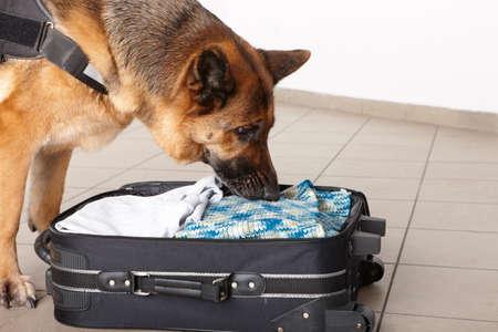 공항 개과입니다. 개는 짐을 마약이나 폭탄을 감지합니다.