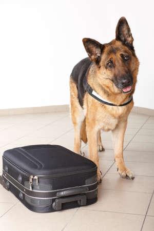 perro policia: La polic�a de perro con el equipaje sospechoso