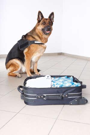 perro policia: La policía de perro con el equipaje sospechoso