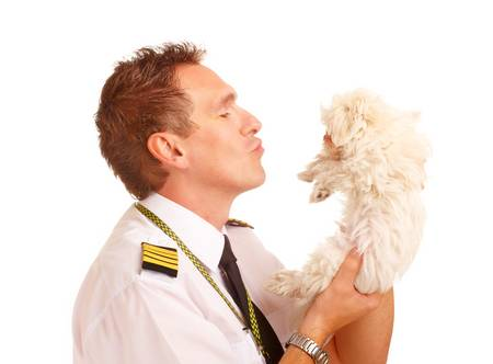 aircrew: Airline pilot wearing uniform with epaulettes with little puppy, dog breed is Maltese.   Stock Photo