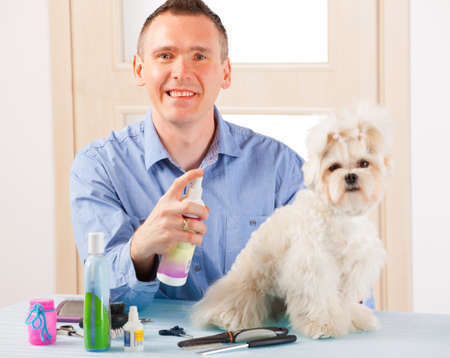 coif: Smiling man grooming a dog purebreed maltese. Stock Photo