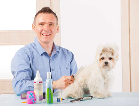 pet grooming: Smiling man grooming a dog purebreed maltese. Stock Photo