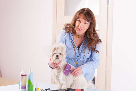 Smiling woman grooming a dog purebreed maltese Stock Photo - 19385796