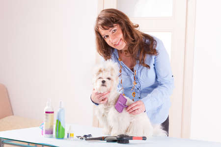 coif: Smiling woman grooming a dog purebreed maltese