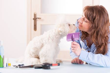 Smiling woman grooming a dog purebreed maltese Stock Photo - 19385803