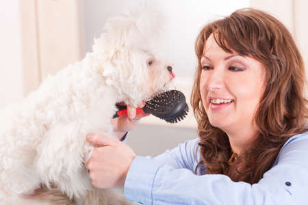 Smiling woman grooming a dog purebreed maltese  Stock Photo - 19385808