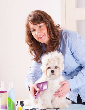 groomer: Smiling woman grooming a dog purebreed maltese