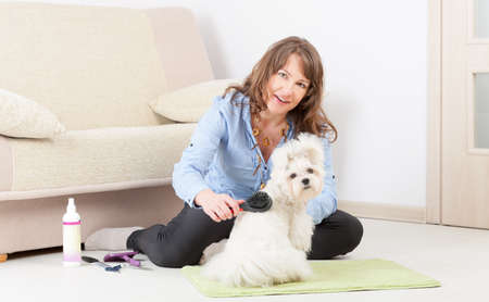 Smiling woman grooming a dog purebreed maltese on the floor at home Stock Photo - 19807979
