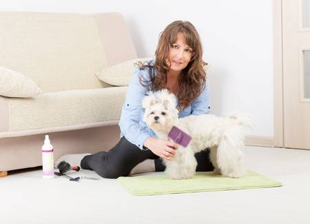 Smiling woman grooming a dog purebreed maltese on the floor at home Stock Photo - 19807981