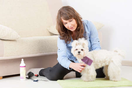 Smiling woman grooming a dog purebreed maltese on the floor at home Stock Photo - 19807985