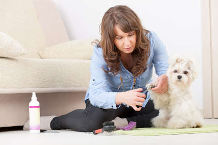 Smiling woman grooming a dog purebreed maltese  Stock Photo - 19807986