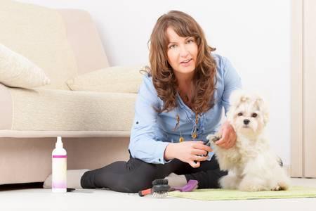purebreed: Smiling woman grooming a dog purebreed maltese