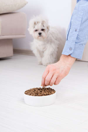 Little dog maltese waiting for eating his food from a bowl in home photo