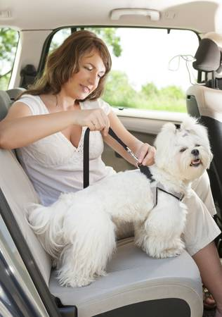 Owner of the dog attaching safety leash to harness to make a\ journey safe