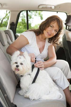 cinturon seguridad: Due?o del perro asocia el correo de seguridad de aprovechar para hacer un viaje seguro