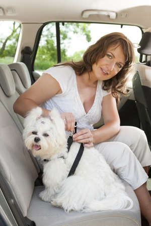 seatbelt: Owner of the dog attaching safety leash to harness to make a journey safe Stock Photo