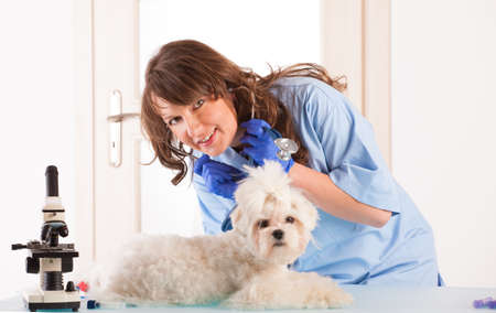 Beautiful woman veterinarian holding cute maltese dog standing in the treatment room with stethoscope photo