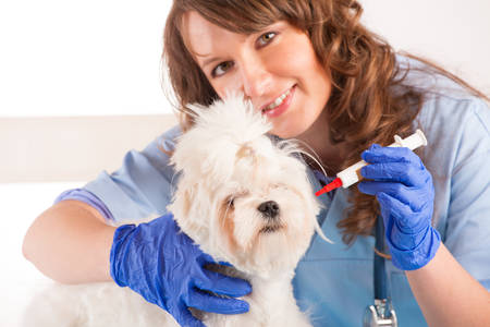 Beautiful woman veterinarian holding cute maltese dog standing in the treatment room and reaching for medicine photo