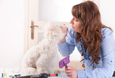 dog grooming: Smiling woman grooming a dog purebreed maltese