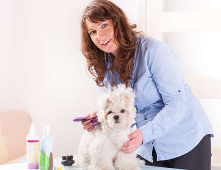 groomer: Smiling woman grooming a dog purebreed maltese  Focus intentionally left on dog