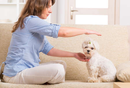 Woman doing Reiki therapy for a dog, a kind of energy medicine  Stock Photo