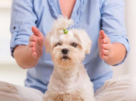 Femme faisant la thérapie du Reiki pour un chien, une sorte de médecine énergétique Banque d'images