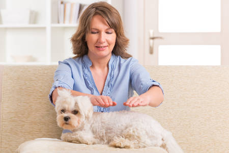 healer: Woman doing Reiki therapy for a dog, a kind of energy medicine  Stock Photo
